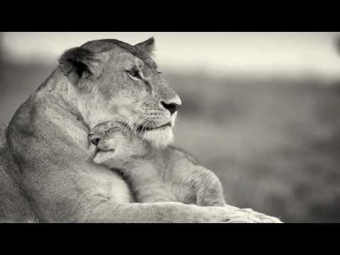 Mayuka Thaïs - The Great Serengeti [Official Video] A song to help save the Serengeti