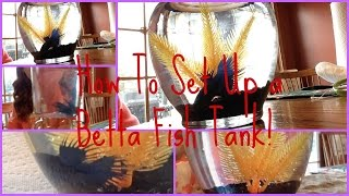 How To Set Up A Betta Fish Tank! Thumbnail