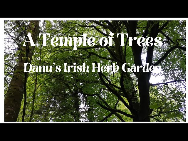 A Temple of Trees