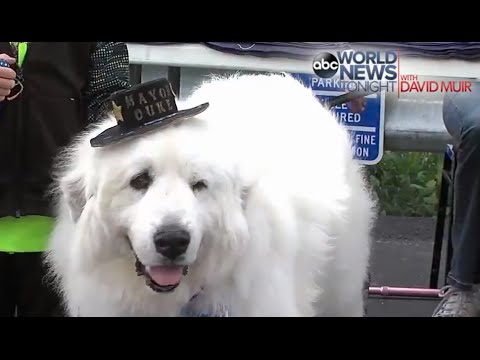 Dog Elected Mayor of Minnesota City (For His THIRD term!)