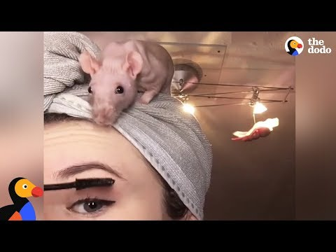 Thumbnail: Rat Family Is Perfect: Girl Loves Her 5 Rats | The Dodo