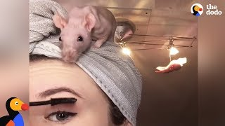 Rat Family Is Perfect: Girl Loves Her 5 Rats | The Dodo thumbnail