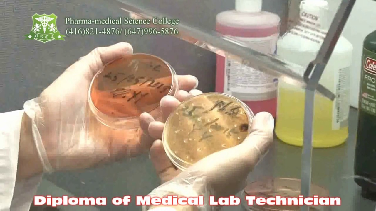 Pharma-medical Science College of Canada - Microbiology video - Medical Lab  Technician