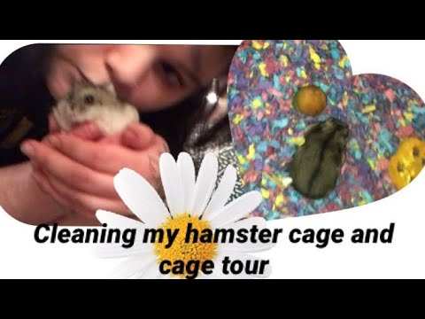 HAMSTER CAGE CLEANING/ SUNNISANIMALS