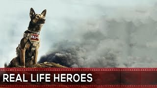 10 Heroic Dogs That Saved People's Lives | Real Life Heroes | ᴴᴰ