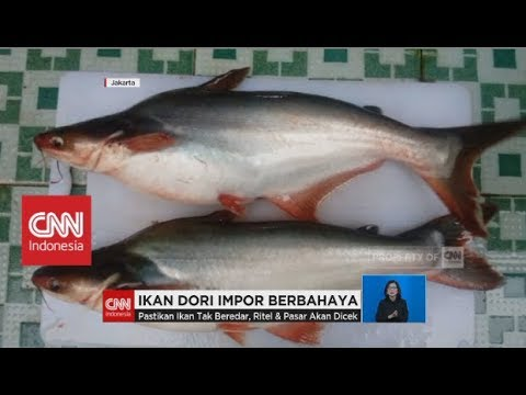 Download 6200 Koleksi Gambar Ikan Dori Terbaru