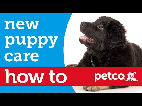 How to - New Puppy Care (Petco)