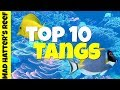 Top 10 Tangs for a Saltwater Tank