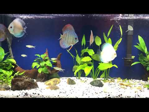 Discus Cobalt, Blue Diamond, White Butterfly, Tiger Turquoise, Leopard Snakeskin, Red Checker, Fuji