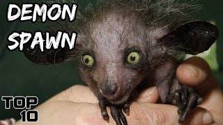 Top 10 Scary Animals People Keep As Pets