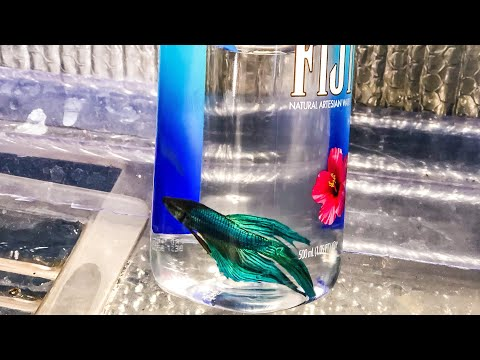 BETTA Fish In A WATER BOTTLE?!