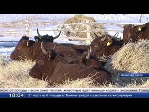 Заниматься животноводством становится выгодно