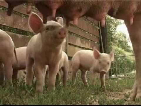 Deoditoo les animaux de la ferme youtube - Animaux ferme photos ...