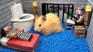 🐹 Hamster escapes the Minecraft jail Maze! 😲 Real life Police traps for hamster