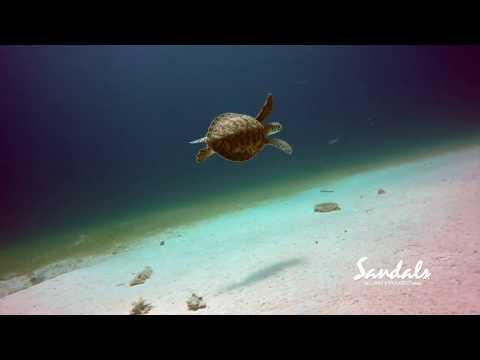 Scuba Diving at Sandals in Jamaica