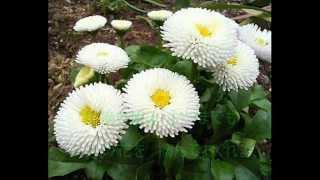 ザ・フォーク・クルセダーズ - 花のかおりに