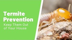 How to Get Rid of Termites – The Ultimate Guide to DIY Termite Treatment