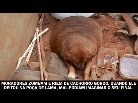 Moradores zombam e riem de cachorro gordo. Quando ele deitou na poça de lama, mal podiam