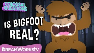 Could Bigfoot Be Real? | COLOSSAL QUESTIONS