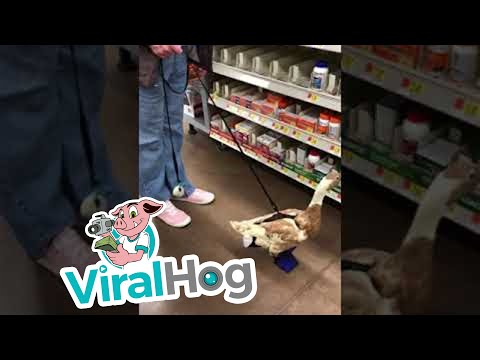 Mack in the Morning - Lady Brings Her Pet Duck into Walmart!