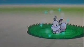 Live Shiny Eevee After 11,037 REs! (Pokemon Black 2)