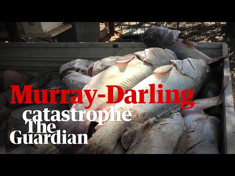 What Caused The Death Of A Million Fish In Australia's Murray-Darling Basin?