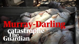 What Caused The Death Of A Million Fish In Australia's Murray Darling Basin