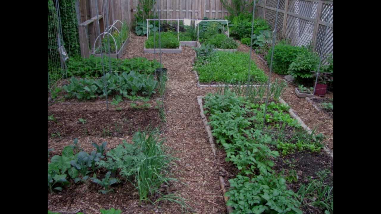yard revolution garden
