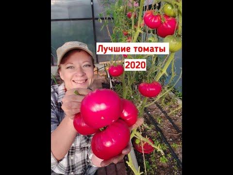 Самый честный обзор томатов: лучшие томаты 2020. Самые урожайные сорта и гибриды помидоров!