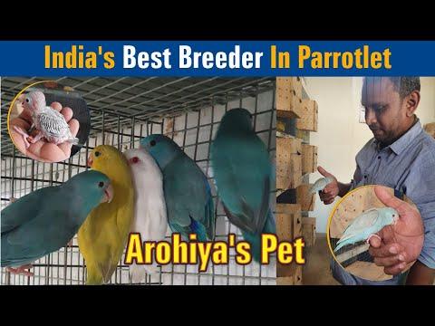 India's Best Breeder