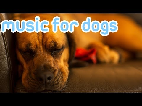 10 HOURS Deep Separation Anxiety Music for Dogs! Chill Your Dog 24/7!