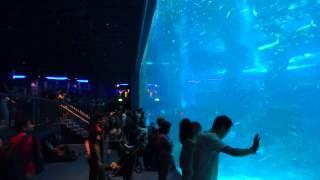 S.E.A. Aquarium, Singapore, HD Experience