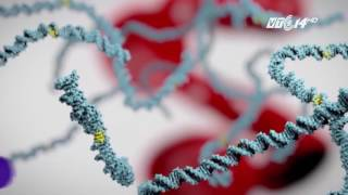 (VTC14)_ Xét nghiệm máu phát hiện được 13 loại ung thư khác nhau