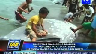 2 malalaking dolphin, natagpuang patay sa Punta Blanca, Zamboanga del Norte