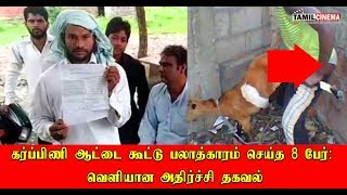 Pregnant goat dies from injuries after being gangraped by 8 men in Haryana | Tamil Cinema News