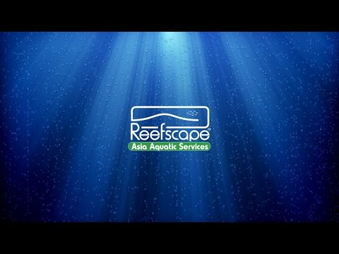 Reefscape Dives Off The Coast Of Koh Samui - The Gulf Of Thailand