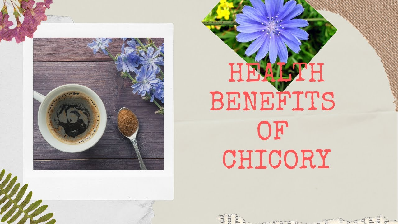 Benefits Of Chicory Drink