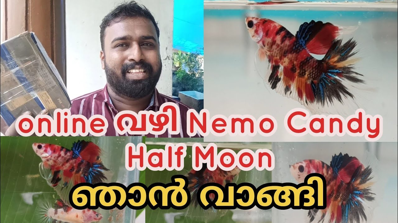 Nemo Candy Half Moon Betta Fish | online വാങ്ങി  |Nemo Candy betta fish unboxing Malayalam