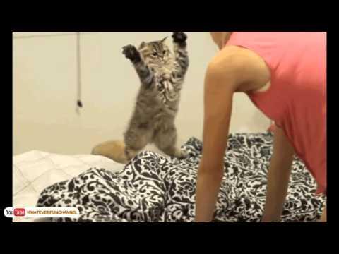 Funny Cat Vines   Short Funny Cats Videos 1