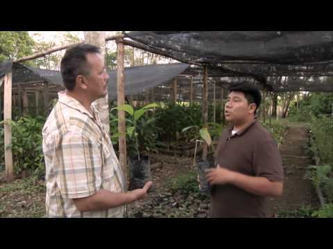 Down2Earth 10.1 - Toledo Cacao Farming (Belize) Part 1