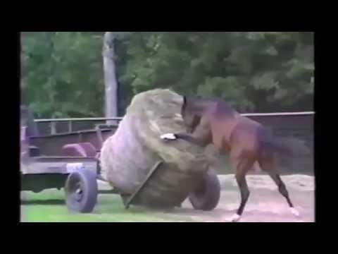 приколы про животных лошадей