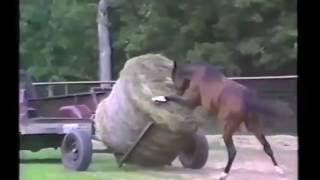 Приколы про лошадей Funny horses jokes веселые лошадки Смешные животные Funny animals