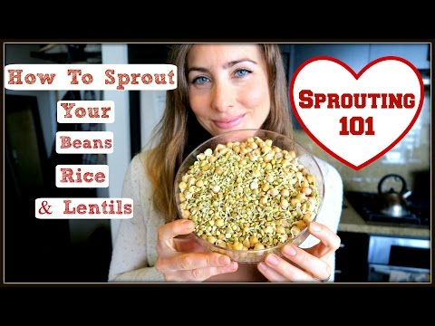 How To Sprout: Beans, Lentils & Rice