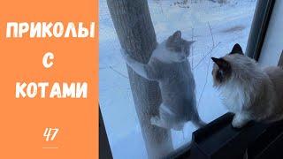 Смешные КОТЫ КОТИКИ КОТЯТА Приколы с животными 47