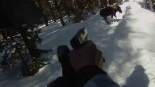 Man shoots moose with his GLOCK after being attacked.