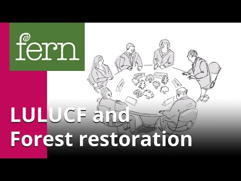 LULUCF: why European forests matter for the climate?