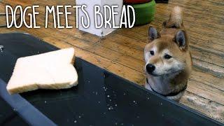 I am Bread - Live Action DOGE Trailer