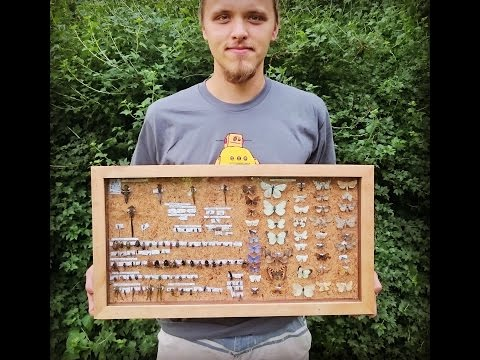 DIY insect collection case