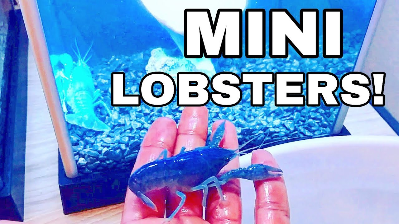 Surprising Catch Em All Fishing With Mini Blue Lobster Pet Youtube