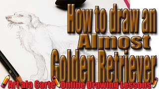 How to almost draw a Golden Retriever